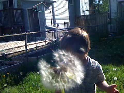 Cameron and the Dandelions