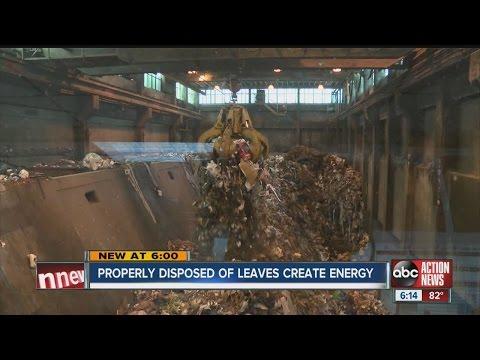 Florida's oak leaf fall creates $8M in energy