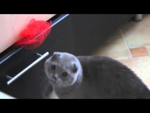 Epic Funny Cat Compilation October 2013