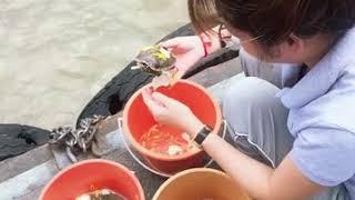 Thả cá, rùa, lươn tại bến sông trong chìa tại bangkok