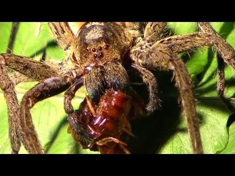 Spiders: Christ, Fucking Spiders - Horrifying Planet - Ep. 5