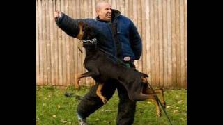 Dog Training - How to train an attack dog. K9-1 Dog Training Style