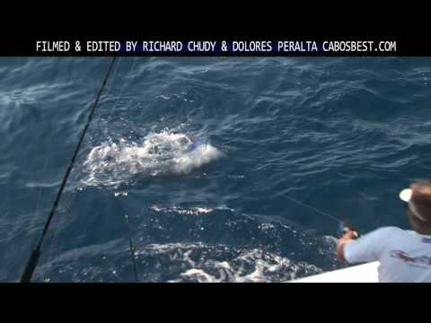 Non-stop Marlin Fishing Action from Cabo San Lucas, Baja, Mexico
