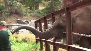Elephant Sized Fun at ZooBOOO!