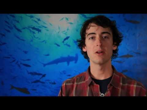 Environmental Lawyers and the Protection of Sharks, Good News Trailer