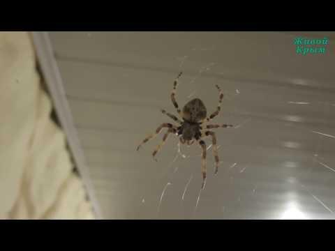 Страшные пауки в доме