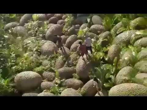 Viaggio nell'Isola Misteriosa Trailer Italiano (2012).wmv