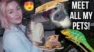 Meet ALL My Pets!! | KristenLeannimal