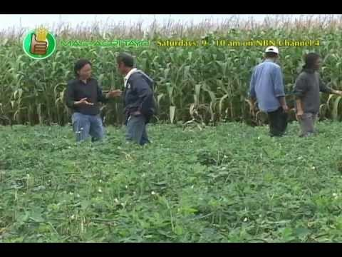 DA-BAR: Peanut & Pigeon Pea Field Day & Technology Forum Part 1