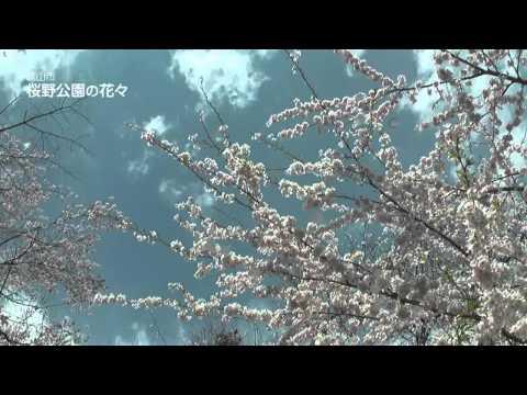 高山市 ~桜野公園の花々~