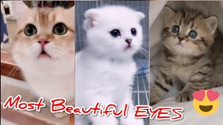 Amazing Baby Animals😍😍Funny And Cute Puppies Compilation