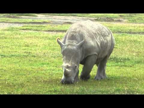 Rhino Lake Nakuru Kenya Africa
