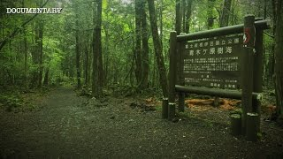 The Haunted Suicide Forest | Japan's Darkest Location | Aokigahara Documentary
