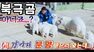 [ENG SUB]  I've adopted a dog. Recommended video too cute!