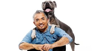 3 Essential Dog Training Tips from Cesar Millan