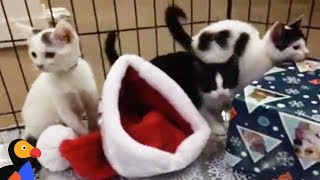 LIVE: Adoptable Kittens Meowing and Playing at Kitten Nursery | The Dodo LIVE