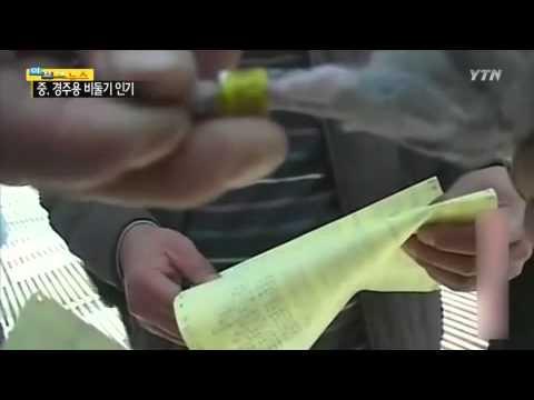 '부의 상징' 경주용 비둘기, 중국서 인기 폭발! / YTN
