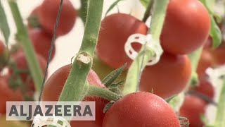 Qatari farmers trying to find new ways to increase production