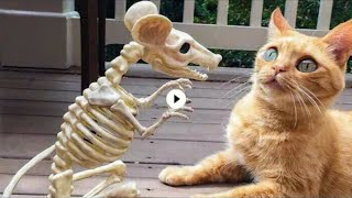 Funny animal ; Funny videos #012 ; 30k subscriptions special