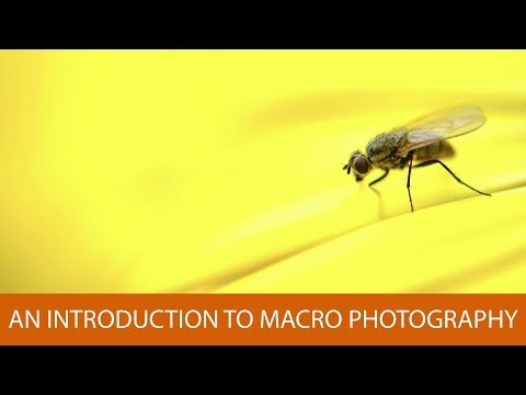 An Introduction to Macro Photography