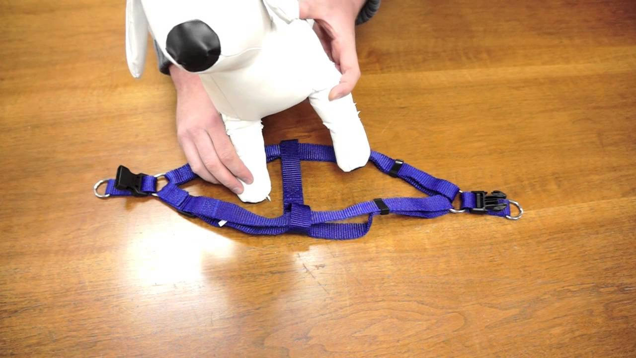 How to Put on a Dog Harness recommend
