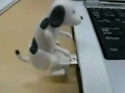 Funny dog flash drive
