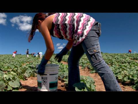 Fingers to the Bone: Child Farmworkers in the United States