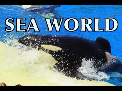 Sea World Park California Show Orca Whales Dolphins Killer Whales  Seals Sting Rays Fish