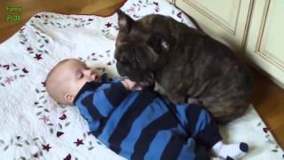 Cute Cats and Dogs Love Babies Compilation 2014 NEW HD 720p
