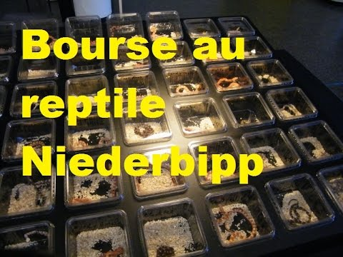 Bourse au reptile Niederbipp