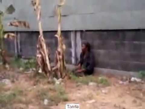 Video Lucu - Orang Gila Masturbasi Pinggir Jalan