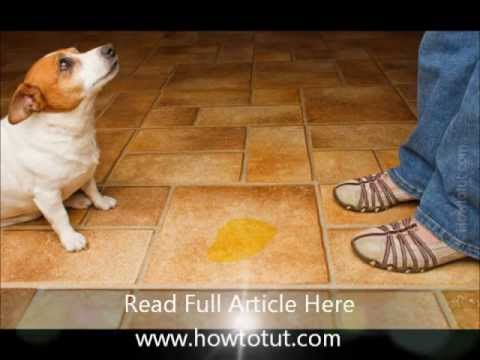 how to clean dog urine from travertine