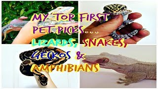 My pick of best beginner reptiles and amphibians