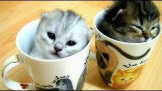 🔴Cute Cats and Funny Dogs Everyday 2018🔴#2 - Cute Nova