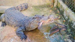 Cho cá sấu và cho rùa ăn, thăm lại nhện và tắc kè, mời các bạn tham quan nhà mới 😄