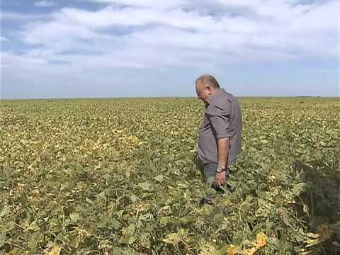 Nos próximos anos, Brasil deve se tornar o maior produtor de soja do mundo