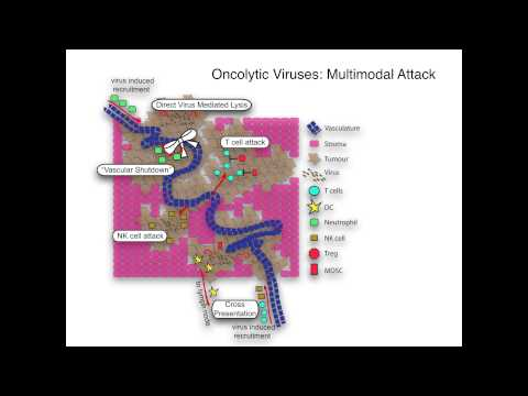 Oncolytic Viruses and Clinical Trials: New Horizons in Brain Cancer Therapys