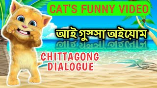 Chittagong cat's funny video