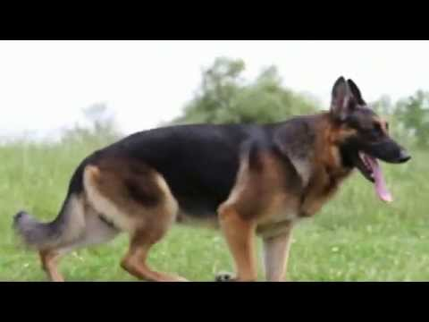 Solo The GSD