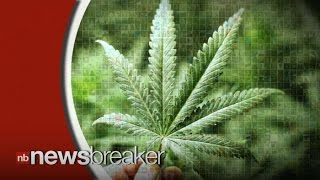 Experts Reveal 20 Year Study Concluding Cannabis Is NOT Harmless