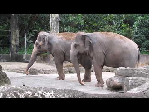 Elephants in Taipei Zoo - Elefant - Animals - Tiere - Állatkert