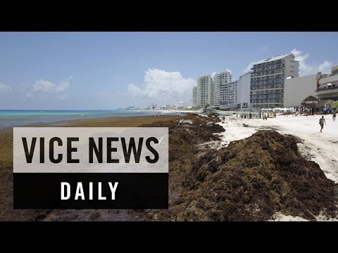 VICE News Daily: Cancun's Beaches Covered in Seaweed