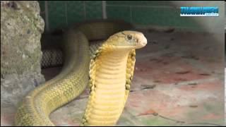 Trại rắn Đồng Tâm - Tiền Giang
