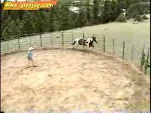 Horse Training Video: 2 of 12