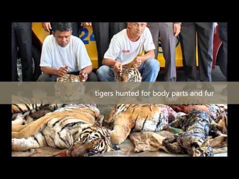 Endangered Speciesmovie video