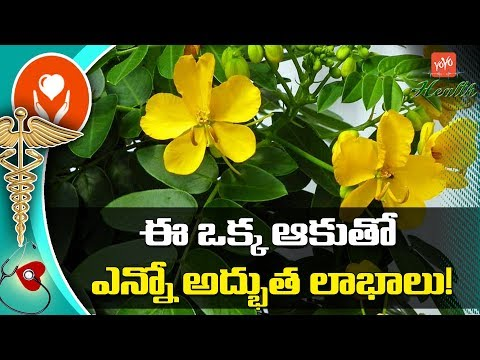 Sonamukhi Uses and Benefits in Telugu | Health Benefits of Sonamukhi Leaves | YOYO TV Health