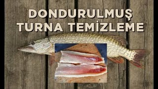 Northern pike filleting techniq - turna pişirme tekniği
