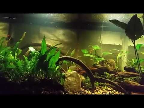 What type of Cichlid Fish can you Keeping a Planted Tanks (Tank Update)