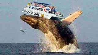 THE BIGGEST WHALE IN THE WORLD
