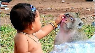 Building Relationship, Baby Human Touch Love Money Sok | Monkey Sok & Baby Compilation.